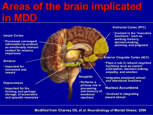 Hanipsych updates on neurobiology and neurotoxicity of depression areas of the brain ccuart Image collections