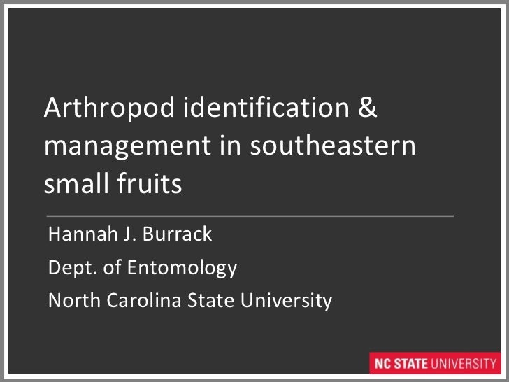 Arthropod identification & management in southeastern small fruits Hannah J. Burrack Dept. of Entomology North Carolina St...