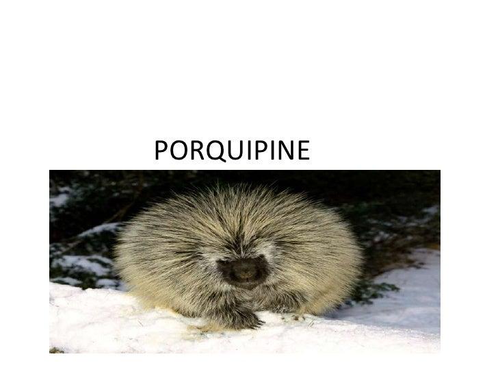 PORQUIPINE<br />