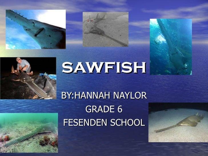 sawfish BY:HANNAH NAYLOR GRADE 6 FESENDEN SCHOOL