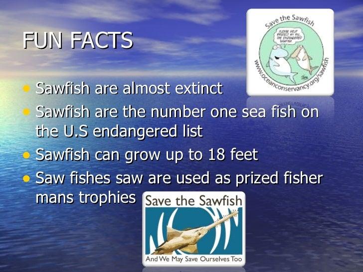 Hannah naylor sawfish