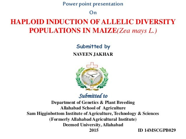haploid induction of allelic diversity populations in maize