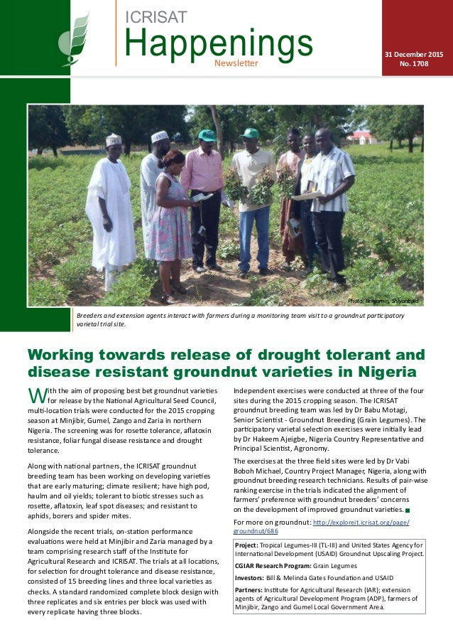 Working towards release of drought tolerant and disease