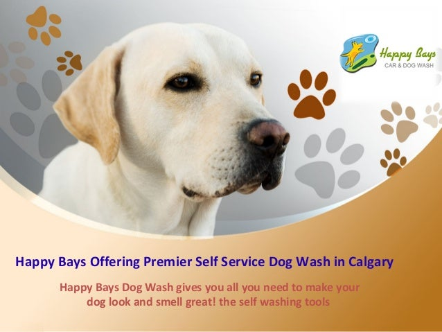 Happy bays offering premier self service dog wash in calgary 1 638gcb1424496580 happy bays offering premier self service dog wash in calgary happy bays dog wash gives you solutioingenieria Gallery