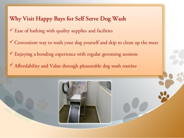 Happy bays offering premier self service dog wash in calgary self washing tools 2 solutioingenieria Choice Image