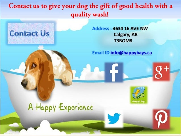 Happy bays offering premier self service dog wash in calgary self service dog wash in calgary 7 solutioingenieria Choice Image