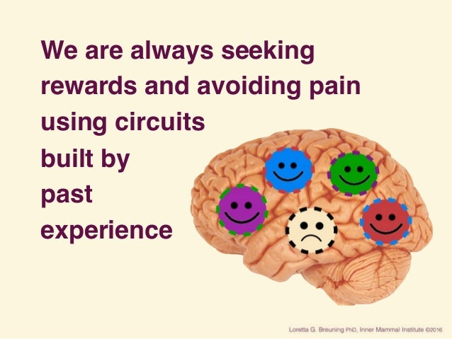We are always seeking rewards and avoiding pain using circuits built by past experience