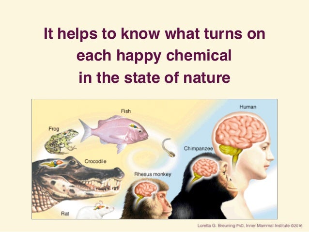 It helps to know what turns on each happy chemical in the state of nature