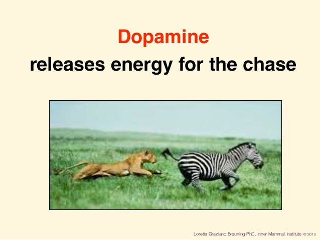 Loretta Graziano Breuning PhD, Inner Mammal Institute © 2015 Dopamine releases energy for the chase