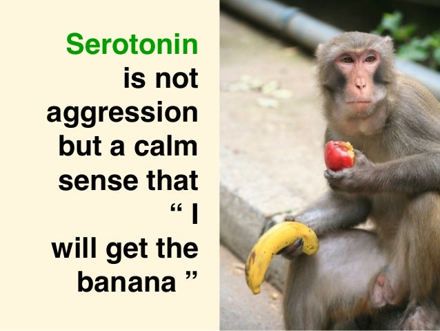"Loretta Graziano Breuning PhD, Inner Mammal Institute © 2015 Serotonin is not aggression but a calm sense that "" I will ge..."