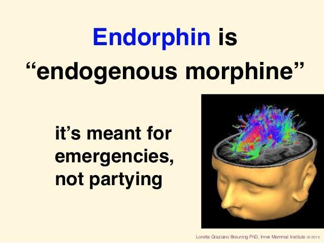 "Loretta Graziano Breuning PhD, Inner Mammal Institute © 2015 Endorphin is ""endogenous morphine"" it's meant for emergencie..."
