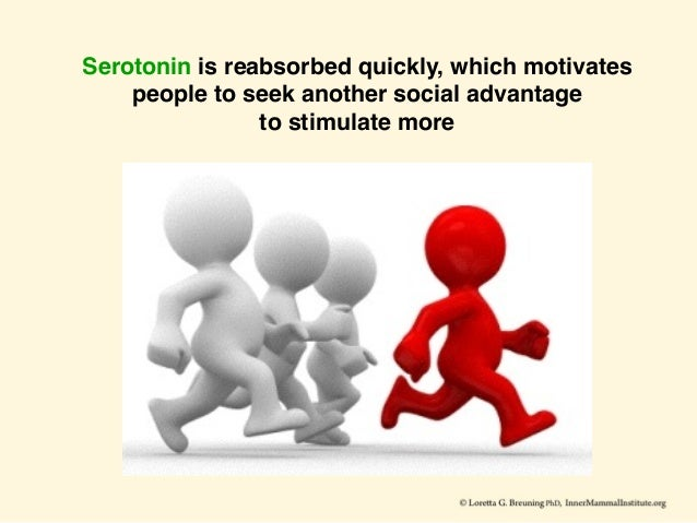 Serotonin is reabsorbed quickly, which motivates people to seek another social advantage to stimulate more