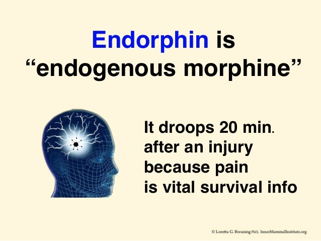 """Endorphin is """"endogenous morphine"""" It droops 20 min. after an injury because pain is vital survival info"""