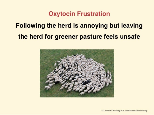 Oxytocin Frustration Following the herd is annoying but leaving the herd for greener pasture feels unsafe