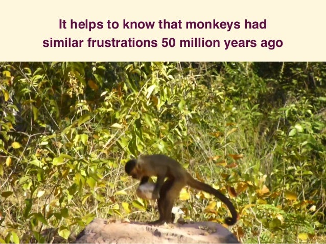 It helps to know that monkeys had similar frustrations 50 million years ago