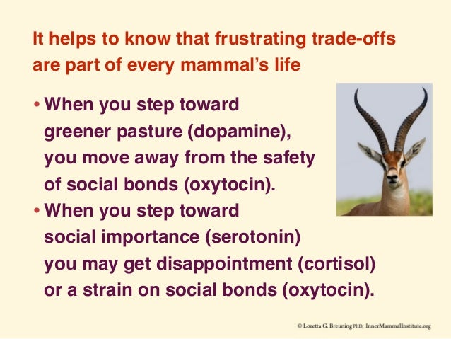 It helps to know that frustrating trade-offs are part of every mammal's life •When you step toward greener pasture (dopam...