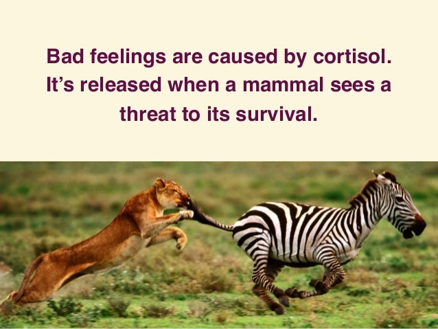 Bad feelings are caused by cortisol. It's released when a mammal sees a threat to its survival.