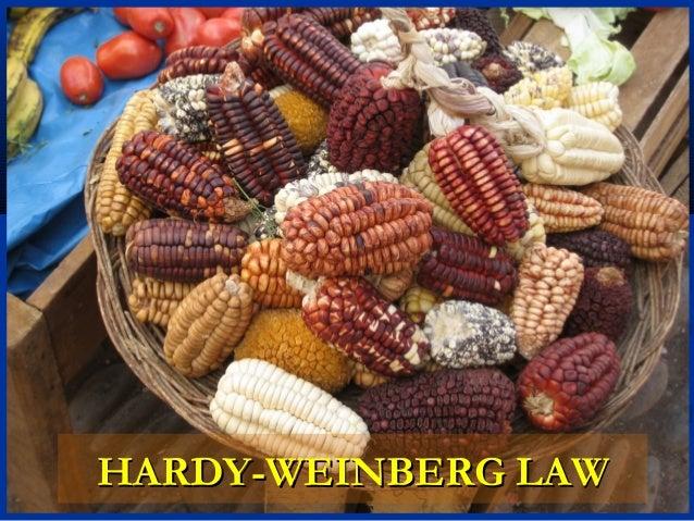 HARDY-WEINBERG LAWHARDY-WEINBERG LAW