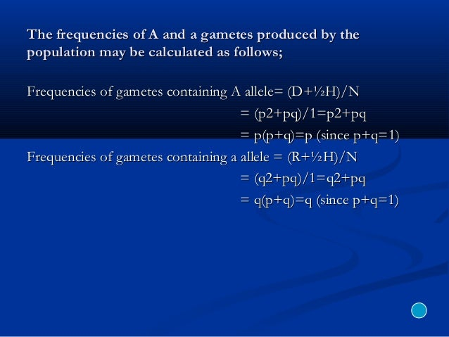 The frequencies of A and a gametes produced by theThe frequencies of A and a gametes produced by the population may be cal...