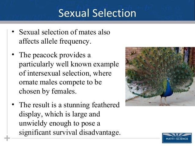Definition intersexual selection