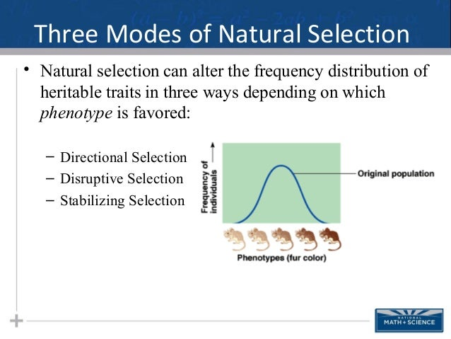 Natural Selection Modes