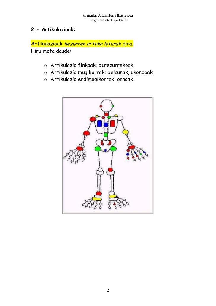 6, maila, Altza Herri Ikastetxea                         Laguntza eta Hipi Gela2.- Artikulazioak:Artikulazioak hezurren ar...
