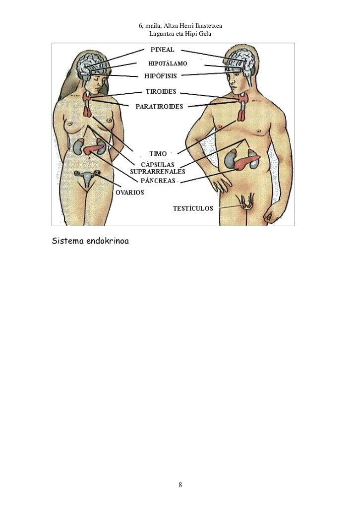 6, maila, Altza Herri Ikastetxea                         Laguntza eta Hipi GelaSistema endokrinoa                         ...