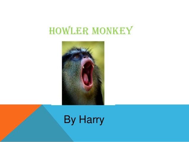 Howler monkey By Harry
