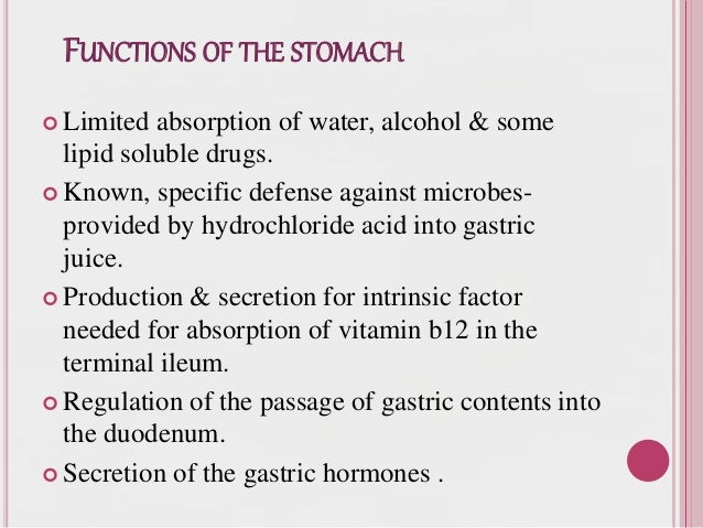 Anatomy and physiology of gi system and diagnostic techniques 50 functions of the stomach ccuart Image collections