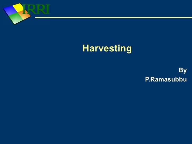 Harvesting                        By              P.Ramasubbu