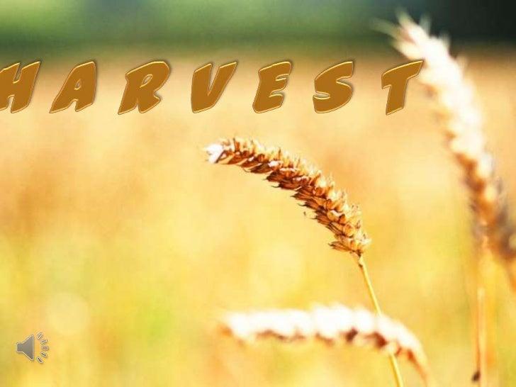 Harvest (v.m.)