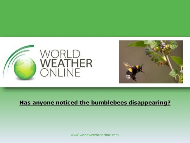 www.worldweatheronline.com Has anyone noticed the bumblebees disappearing?