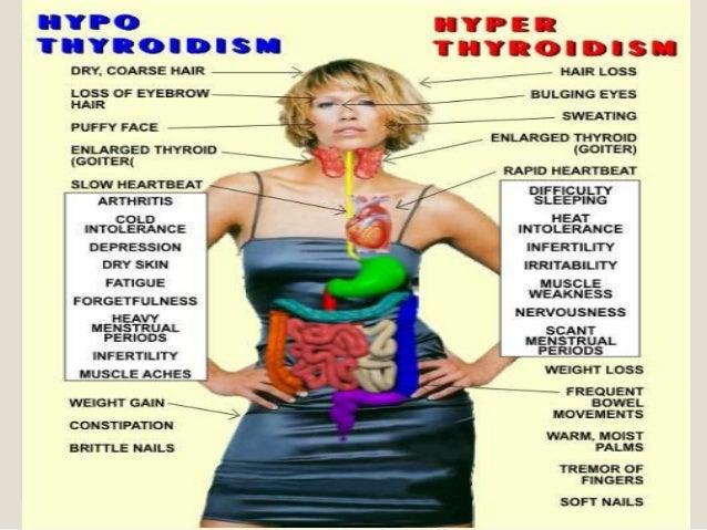 hashimoto's thyroiditis, Human Body