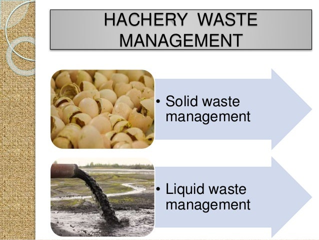 Hatchery management in Poultry (Fumigation)