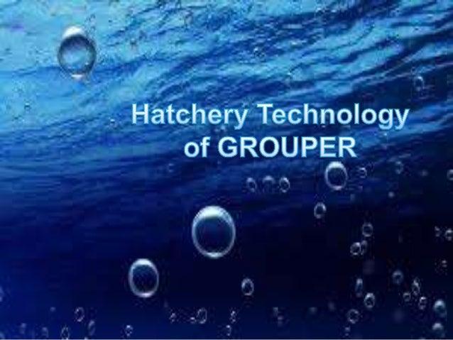 Grouper dating shut down