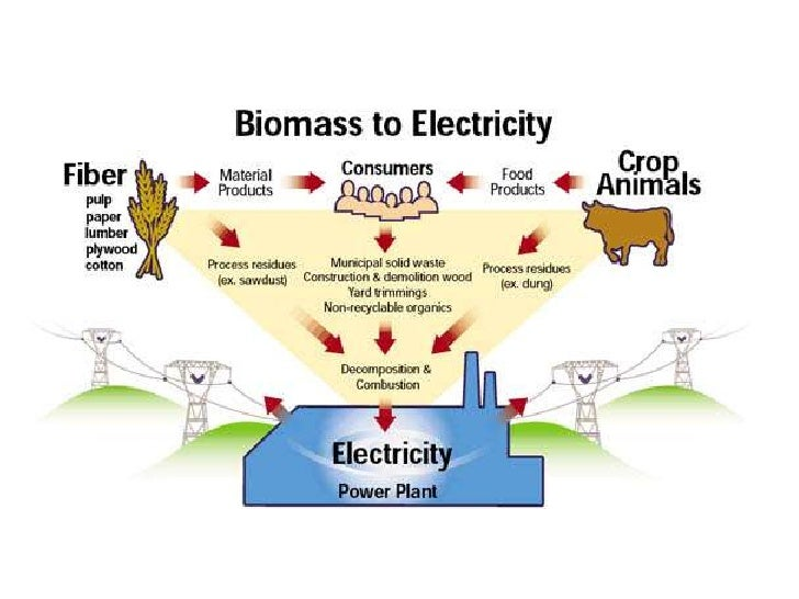 biomass energy diagram - photo #17