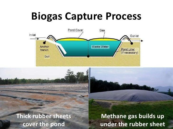 Biomass Presentation To Ism Grade 3 Feb 2011