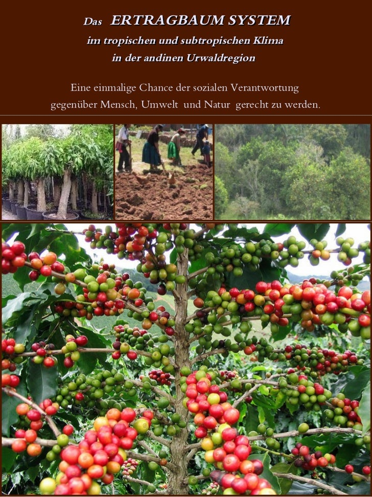Das   ERTRAGBAUM SYSTEM      im tropischen und subtropischen Klima           in der andinen Urwaldregion    Eine einmalige...