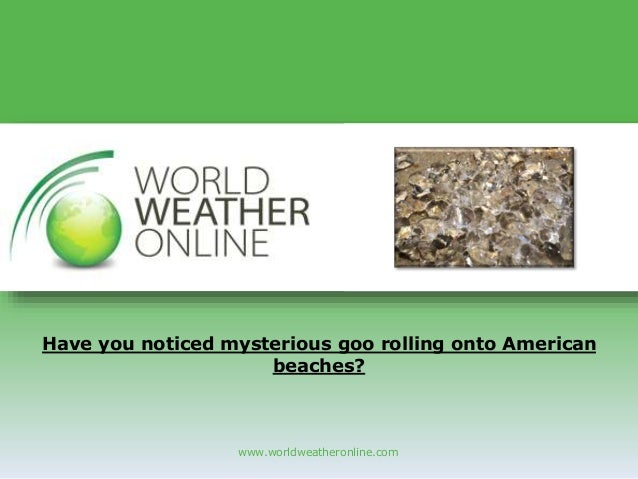 www.worldweatheronline.com Have you noticed mysterious goo rolling onto American beaches?