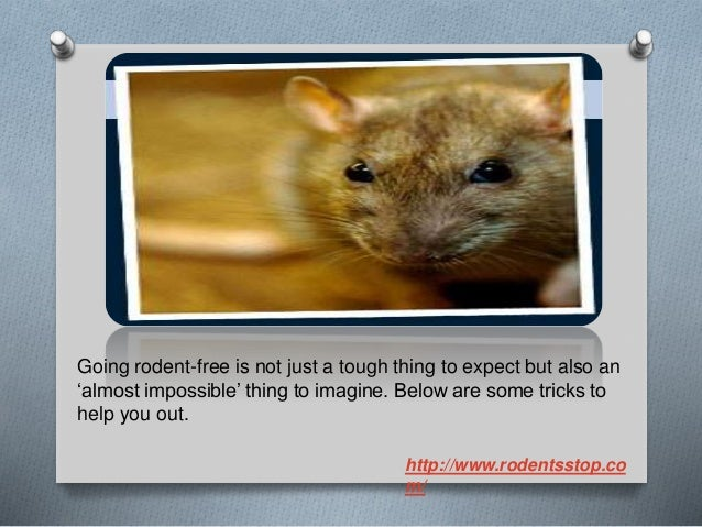 Have you tried these rodent proof house tricks