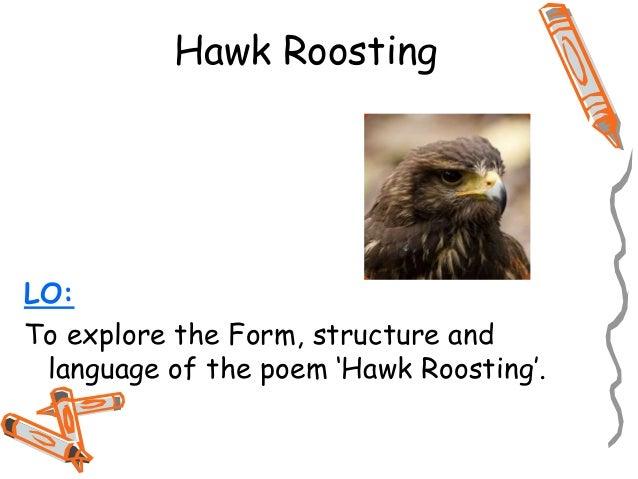 Hawk roosting ted hughes essay