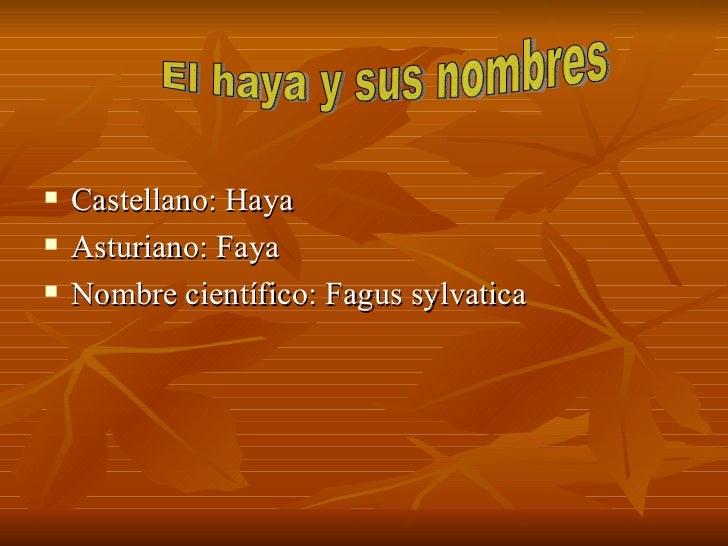Haya (david y alberto) Slide 2