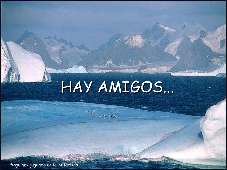 Pingüinos jugando en la Antártida HAY AMIGOS...
