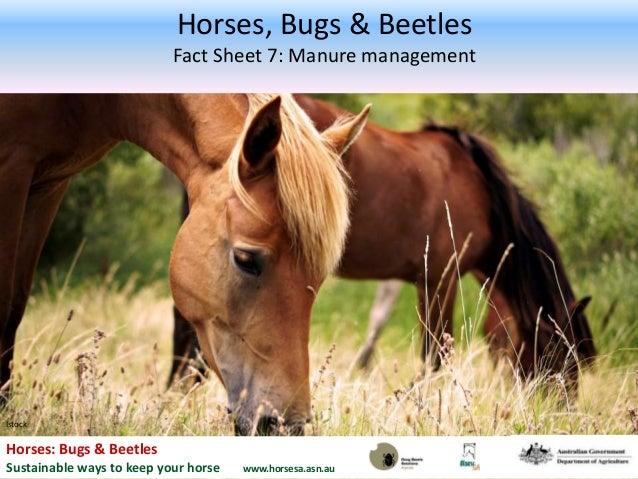 Horses: Bugs & Beetles Sustainable ways to keep your horse www.horsesa.asn.au Horses, Bugs & Beetles Fact Sheet 7: Manure ...