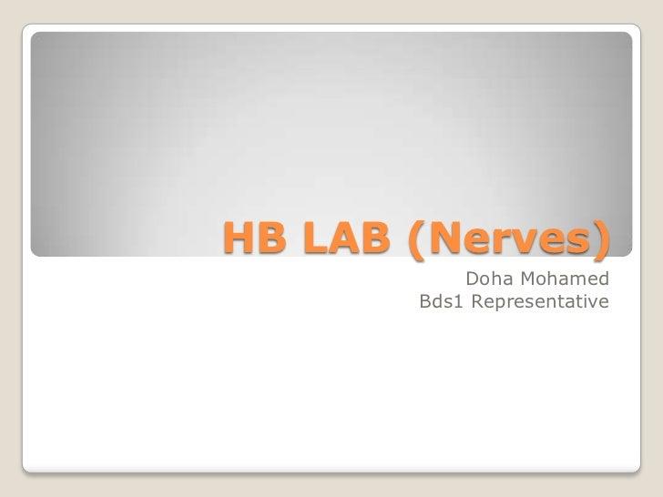 HB LAB (Nerves)<br />Doha Mohamed<br />Bds1 Representative<br />