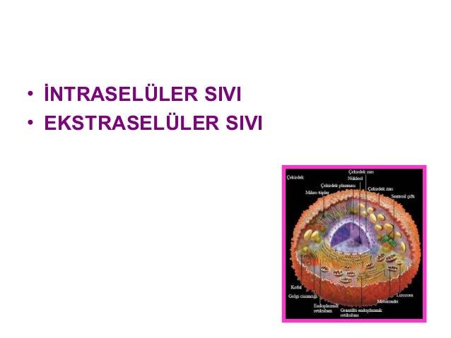 Hücre zarında transport Slide 2