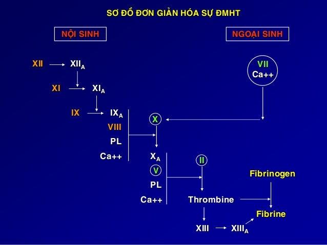 Các yếu tố đông máu I : Fibrinogen : 2 - 4 g/l II : Prothrombin : 100% V : Proaccelerine : 100% VII : Proconvertine : ...