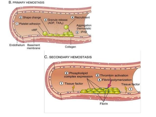 haemolytic disease of the newborn pdf