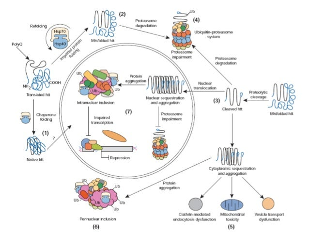 Genes, Environment,