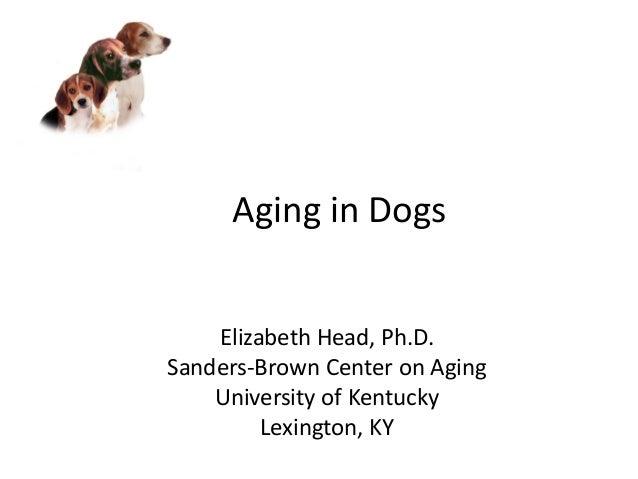 Aging in Dogs Elizabeth Head, Ph.D. Sanders-Brown Center on Aging University of Kentucky Lexington, KY